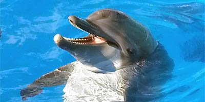 Dolphin at Clearwater Aquarium with its perpetual smile